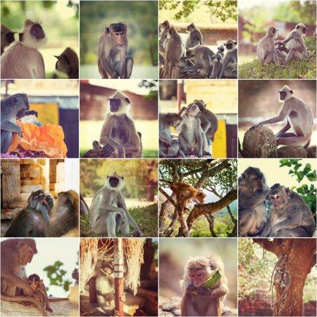 Photo pour Collection de photos de singes, collage - image libre de droit