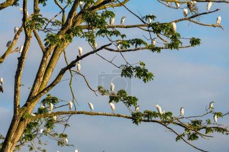 Photo pour Oiseaux blancs assis sur les branches de l'arbre - image libre de droit