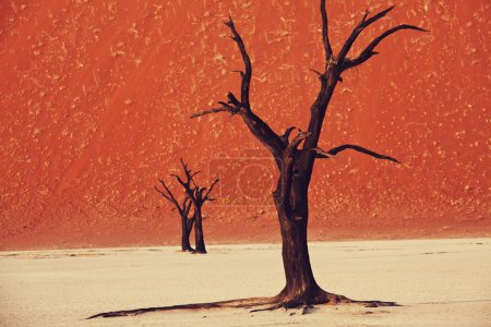 Dead Valley in Namib desert