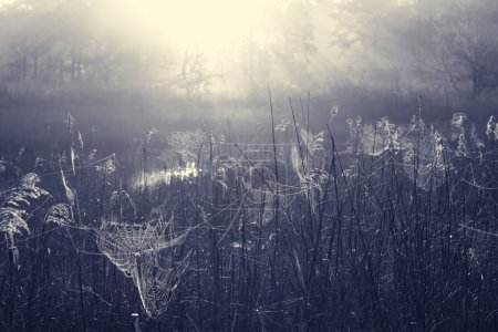 Fog on meadow at sunrise