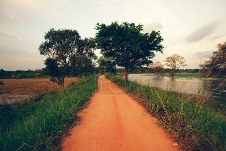 road in remote jungle