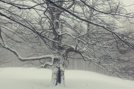 Scenic snow-covered forest