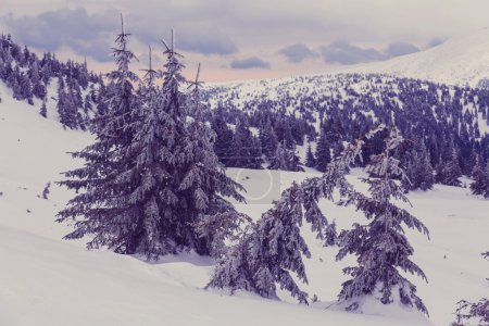 Carpathian mountains covered with snow