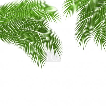 Illustration for Palm tree leaves with a place for your text. Beautiful garden card design. vector illustration - Royalty Free Image