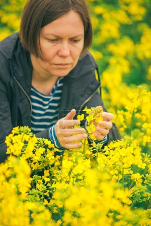 Photo pour Femme agronome dans le domaine de la floraison du colza, femme contrôlant la croissance des cultures agricoles . - image libre de droit