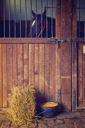 Beautiful Black Horse in the Barn