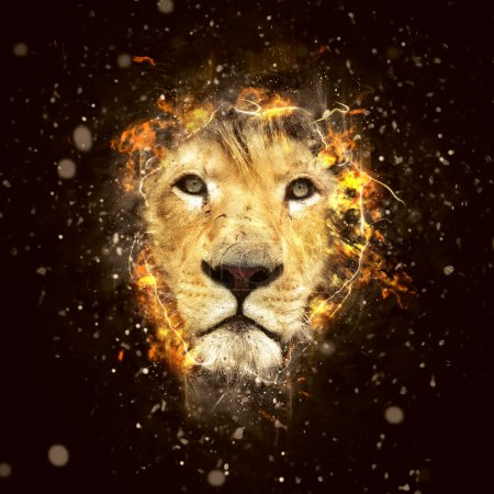 Photo for Lion, the King of beasts and the most dangerous animal of the world. - Royalty Free Image