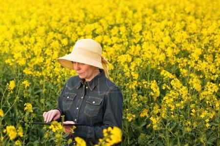 Photo pour Agriculteur femelle utilisant un ordinateur tablette numérique dans un champ agricole cultivé de colza oléagineux Examiner et contrôler la croissance des plantes - image libre de droit