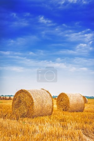 Hay bale rolls in cultivated field after wheat har...