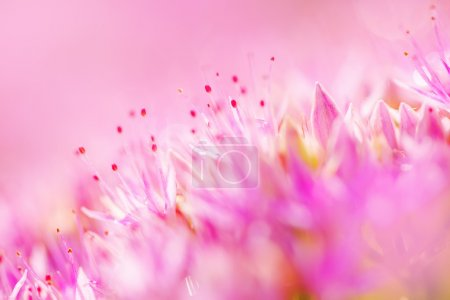 Photo for Macro shot of pink flower, extreme close up as abstract natural background, selective focus - Royalty Free Image