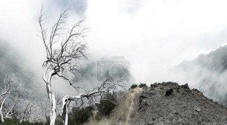 Photo pour Arbres morts secs dans les montagnes brumeuses - image libre de droit