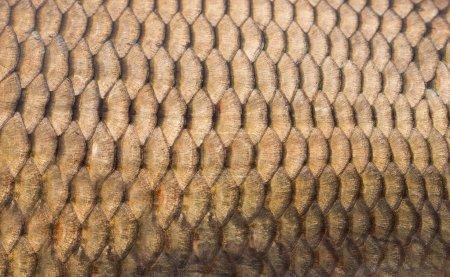 Fischschuppen im Hintergrund