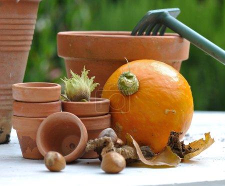 Gathering of hazelnut and pumpkin