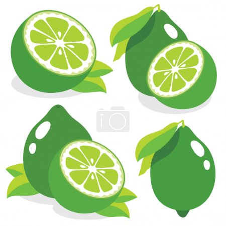 Illustration for Collection of lemon vector illustrations - Royalty Free Image