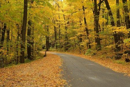 Photo pour Couleurs automne le long d'une route rurale dans la Devils Lake State Park, près de Baraboo, Wisconsin - image libre de droit