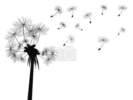 Dandelion flying background