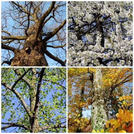 Photo pour Ensemble de quatre arbres pour chaque saison - image libre de droit
