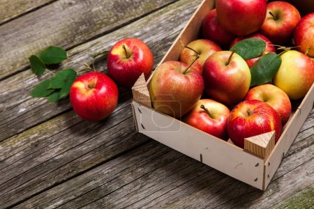 Photo for Fresh red apples in a wooden crate - Royalty Free Image