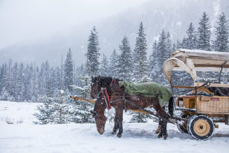 Two horses on a snowy winter day
