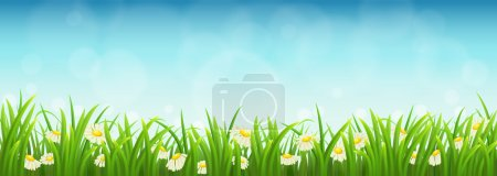 Green grass, flowers and blue sky