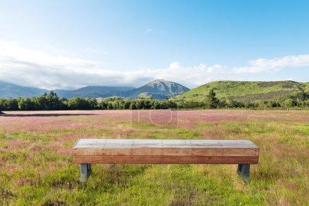 wood floor with pasture in New Zealand