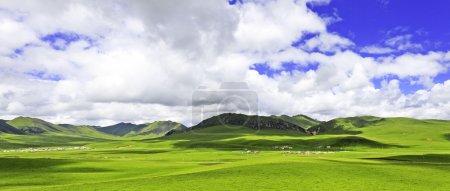 Meadow, skyline and landscape in tibet