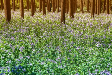 flower blossom in forest