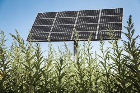 Foto de Paneles solares en el fondo de energía limpia y verde - Imagen libre de derechos