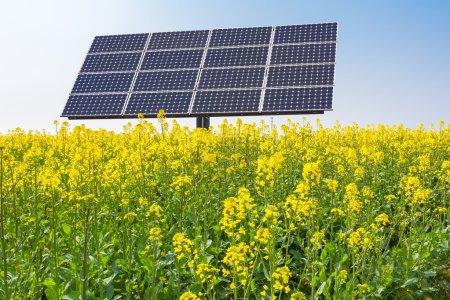 Foto de Paneles solares en campos de flores de colza, nueva energía en primavera - Imagen libre de derechos