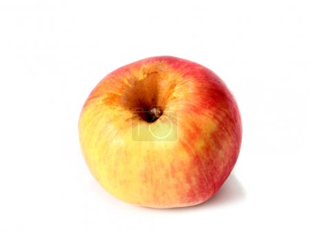 Photo for A beautiful ripe apple as an element of the autumn harvest - Royalty Free Image