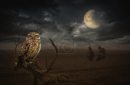 Photo for Owl on a dead branch in a night steppe, (illustration of a fictional situation, in the form collage of photos) - Royalty Free Image