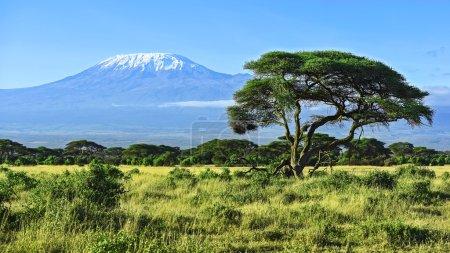 Photo pour Le Kilimandjaro au Parc National d'Amboseli au Kenya - image libre de droit