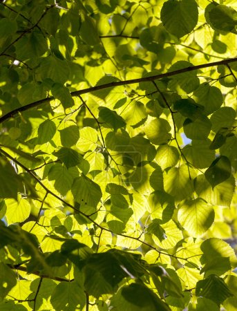 Photo for Sunlight filtering through tree leaves - Royalty Free Image