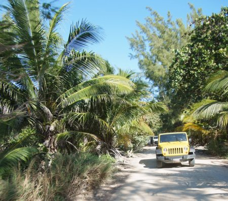 Jeeps on the jungle