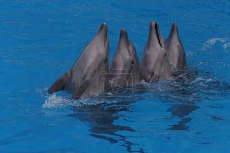 Four dancing dolphins