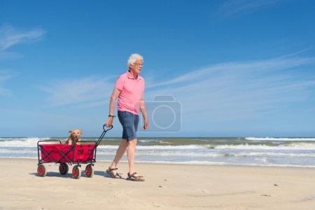 Senior man walking with dog at beach