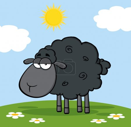 Black Sheep On A Meadow.