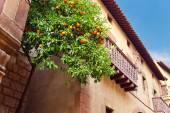 orange tree in Old town , Barcelona