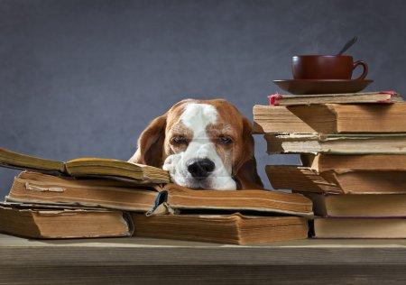 Photo pour Chien très intelligent réfléchit dans la bibliothèque - image libre de droit