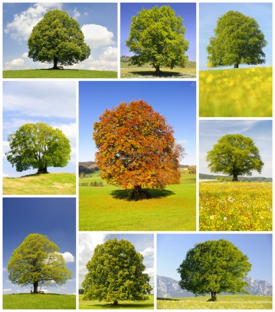 Photo for Collage of single big trees in meadow at spring and summer - Royalty Free Image
