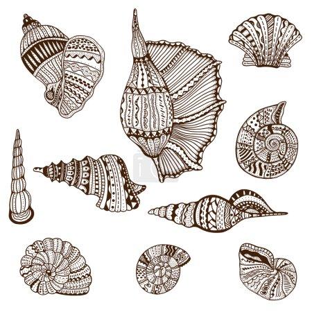 Seashell set collection