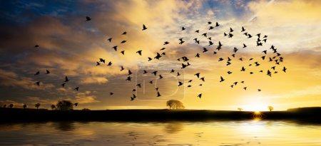 Sunrise with flock of birds