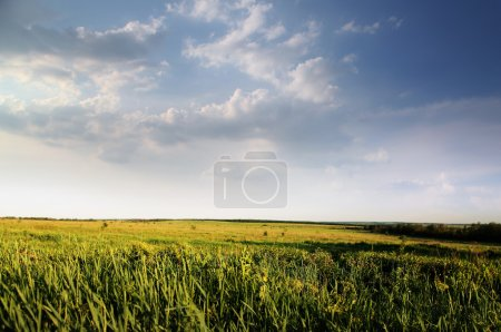 green field of summer grass