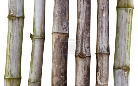 Tiges sèches de bambou