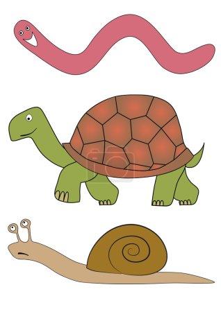 vector slowly animals