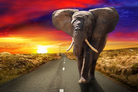 Walking elephant at sunset