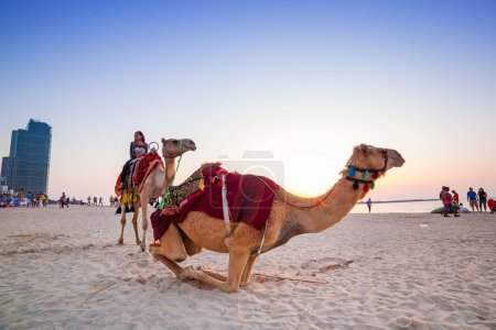 Camel ride on the beach at Dubai