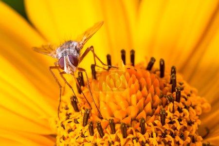 Photo pour Voler sur la fleur gros plan - image libre de droit