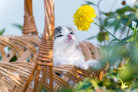 Little kitten sitting in a basket on the floral la...