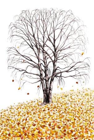 Photo pour Bouleau et feuilles tombées illustration dessinée à la main isolé sur fond blanc - image libre de droit